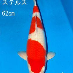 Sakai Auction, 22 maart: afbeelding 29