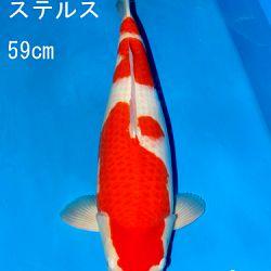 Sakai Auction, 22 maart: afbeelding 30