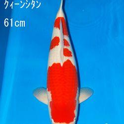 Sakai Auction, 22 maart: afbeelding 31