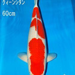 Sakai Auction, 22 maart: afbeelding 32