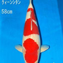 Sakai Auction, 22 maart: afbeelding 33