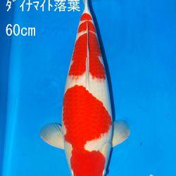 Sakai Auction, 22 maart: afbeelding 34