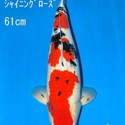 Sakai Auction, 22 maart: afbeelding 35