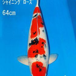 Sakai Auction, 22 maart: afbeelding 38