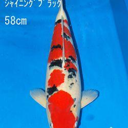 Sakai Auction, 22 maart: afbeelding 40
