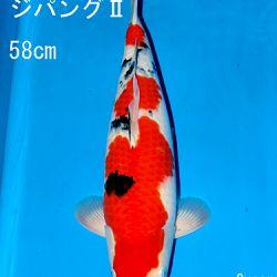 Sakai Auction, 22 maart: afbeelding 44