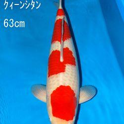 Sakai Auction, 22 maart: afbeelding 47