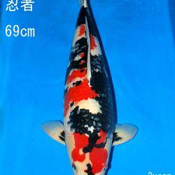 Sakai Auction, 22 maart: afbeelding 49