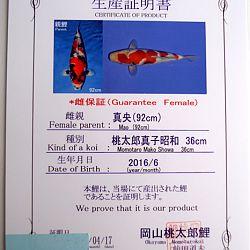 Showa 4137: afbeelding 1