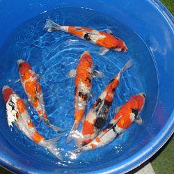 Steek je handen eens in het water...: afbeelding 2