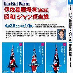 Super Jumbo Tosai Event: afbeelding 17