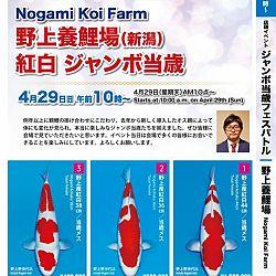 Super Jumbo Tosai Event: afbeelding 25