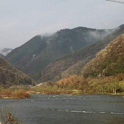 Tategoi selectie door Momotaro koi farm: afbeelding 23