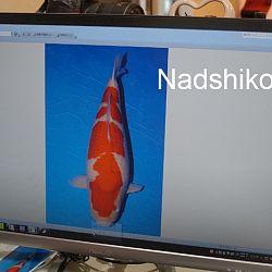 Update Taniguchi sanke: afbeelding 2