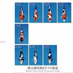Veiling Momotaro 17 november: afbeelding 10