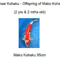 Veiling Momotaro 30 september: afbeelding 4