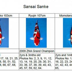Veiling Momotaro 30 september: afbeelding 16