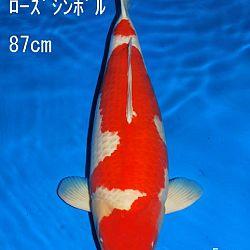 Veiling Sakai: afbeelding 1
