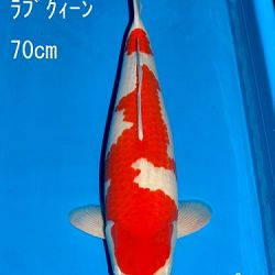 Veiling Sakai: afbeelding 18