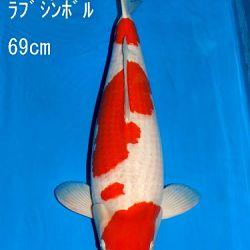 Veiling Sakai: afbeelding 25