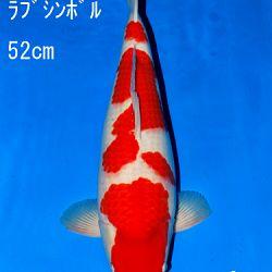 Veiling Sakai: afbeelding 55