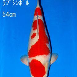 Veiling Sakai: afbeelding 56