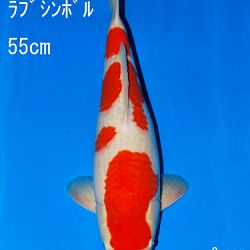 Veiling Sakai: afbeelding 58