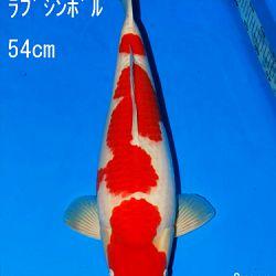 Veiling Sakai: afbeelding 64