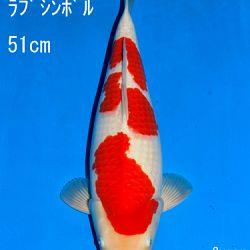 Veiling Sakai: afbeelding 68