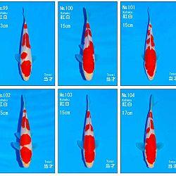 Veiling Sakai SFF op 21 februari: afbeelding 8