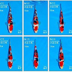 Veiling Sakai SFF op 21 februari: afbeelding 10