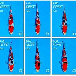 Veiling Sakai SFF op 21 februari: afbeelding 12