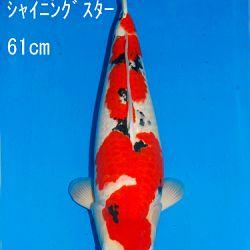 Veiling Sakai SFF op 21 februari: afbeelding 15