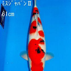 Veiling Sakai SFF op 21 februari: afbeelding 24
