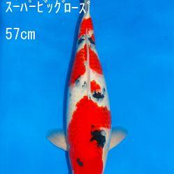 Veiling Sakai SFF op 21 februari: afbeelding 31