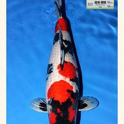Wat is de miyabi prijs in Japan: afbeelding 1