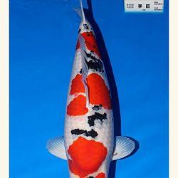 Wat is de miyabi prijs in Japan: afbeelding 3