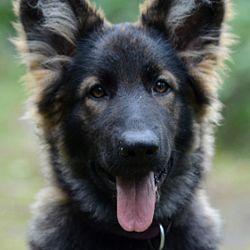 Zijn er nog kandidaten voor puppies: afbeelding 3